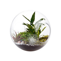 Open-Faced Terrarium