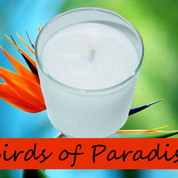 Birds of Paradise Scented Candle in Tumbler 13 oz