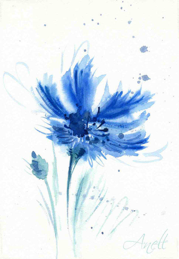 Cornflower watercolor blue watercolor from anellhappywatercolor