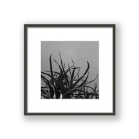 Black and White Monochromatic Wildlife Photography, South African Aloe Photography, Wall Art, Modern Minamalistic Decor, Giclee Art Prints.