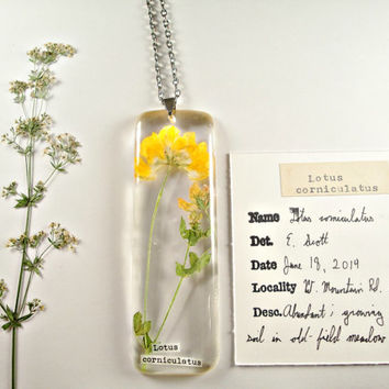 Herbarium Pendant - Bird's Foot Trefoil (Lotus corniculatus) - Preserved Botany Specimen Jewelry, Wildflower Herbal Necklace
