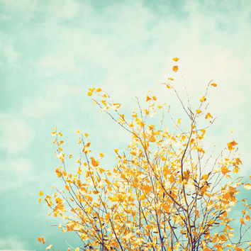 Nature Photography tree wall art fine art by CarolynCochrane