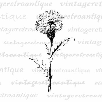 Printable Bee Sitting on Dandelion Digital Download Flower Graphic Insect Image Vintage Clip Art Jpg Png Eps  HQ 300dpi No.860