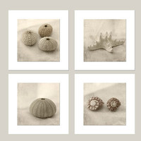 Framed Photographs, Sepia Seashell Photos, Starfish, Sea Urchin Shabby Chic Home Decor, Monochromatic Nautical Wall Decor