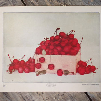 original antique cherry lithograph print 1902 by A. W. Mumford // vintage ephemera