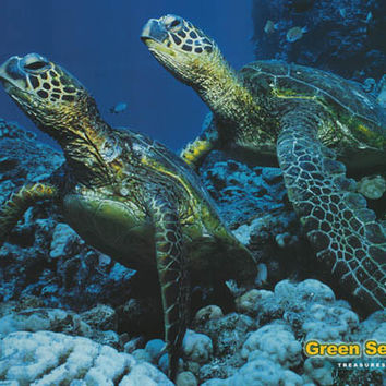 Green Sea Turtles Animal Poster 24x36