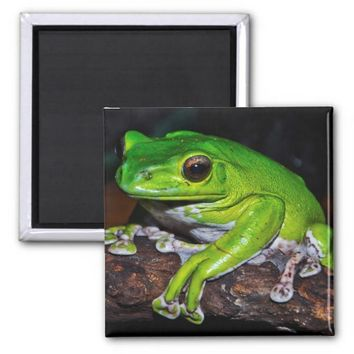 Chinese flying frog 2 inch square magnet