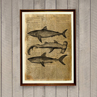 Fish wall decor Sharks poster Nautical print  Dictionary page