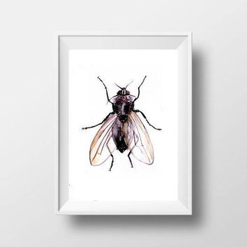 fly watercolor painting insect boy kid nursery decor print simple wall art handdrawing fun men gift artwork  5x7 8x10 11x14 16x20 24x36 art