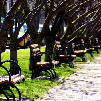 Millions of Benches 11x14 Photography Print Roosevelt by thebqe