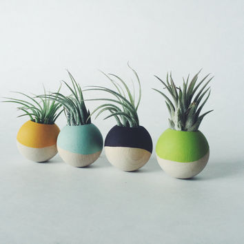 Wood Sphere Paint-Dipped Magnets with Air Plant; Living Magnet; Neodymium; Dipped; Dip Dyed; Home Decor; Desk Accessory; Cubical; Gift