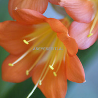 orange flower side wiew photo card 5x7