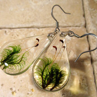 Moss (Dicranum sp.) Earrings, woodland, forest, bryophytes, plant jewellery, leaf jewelry