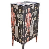 Anatomy Skeleton Chest Of Drawers