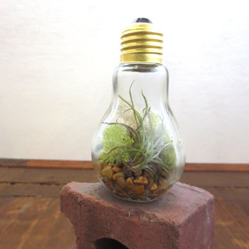 You Light Up My Life...Miniature Desktop Garden Glass Lightbulb Terrarium Air Plant Miniature Terrarium Decor Green Gift Recycled Lightbulb