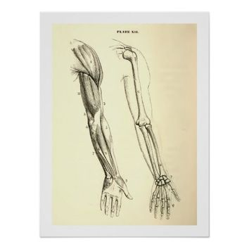 Vintage Anatomy | Muscles and Bones of the Arm Print