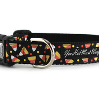 Candy Corn Dog Collar