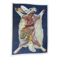 Pre-owned Vintage Anatomy Science Poster - Rabbit