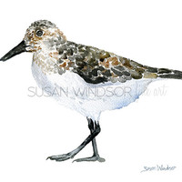 Sandpiper Watercolor Painting - 8 x 10 Giclee Print - Beach Painting - 8.5 x 11 - Bird Art