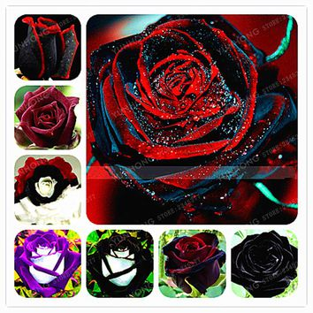 50PCS Rare Rose Seeds Black Rose Flower With Red Edge Rare Rose Flowers Seeds DIY Garden Bonsai Planting Home Garden Plant