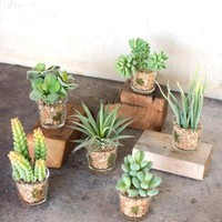 Set of 6 Artificial Succulents with Glass Containers