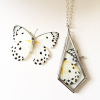 Real butterfly wing pendant polka dot black and white