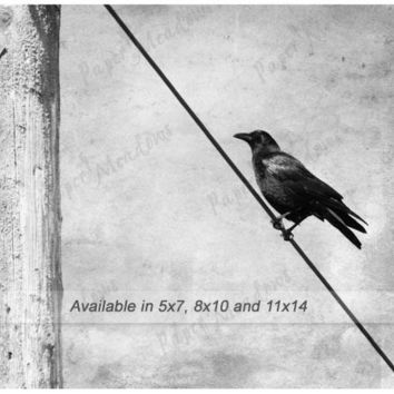 Bird on a wire, Crow, Raven Blackbird, Digital Image Download, Black and white