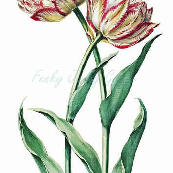 TULIPS! Shabby Chic Flower Art ~ Cottage Chic Tulip Art Print ~ Antique Vintage Pink White ~ 2 Variations Included ~ Digital Graphics