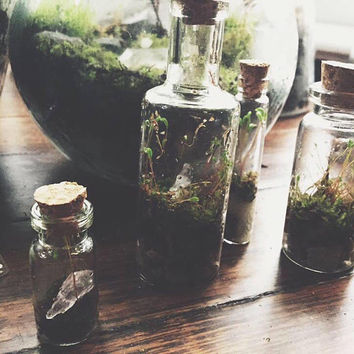 Mini Glass Terrariums