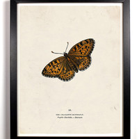 The Butterfly Taxonomy Charlotte Butterfly Antique Illustration  8 x 10 Giclee Art Print Upcled Collage Recycled Book Art Buy 2 Get 1 FREE