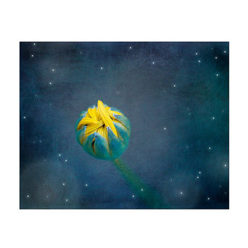 "Yellow Flower Photography / flower bud night stars moon / yellow midnight blue cobalt bedroom decor / 8x10 photograph print / ""Good Night"""