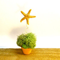 Little Moss Plant Starfish Pick Fairy Garden Beach Decor