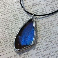 Blue Morpho Butterfly Wings Pendant Soldered Glass Charm Butterfly Specimen Jewelry Something Blue