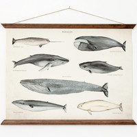 Whales A3 Canvas poster - vintage educational chart illustration - home decor - WHAP3006