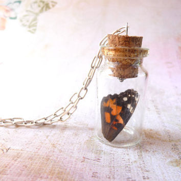 Butterfly wing in glass jar necklace, hand raised from baby caterpillar