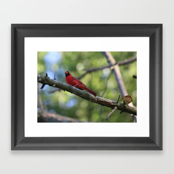 Cardinal Series III Framed Art Print by Theresa Campbell D'August Art