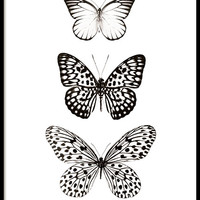 Three butterflies, posters