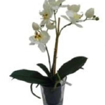 "18.5"" Potted Phalaenopsis Orchid Artificial Silk Flower Arrangement in Vase"