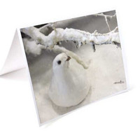 Dove Christmas Card Set, Winter Holiday Cards, Snow Photo Cards