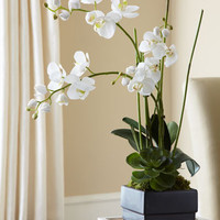 John-Richard Collection White Orchid in Black Planter Faux-Floral Arrangement