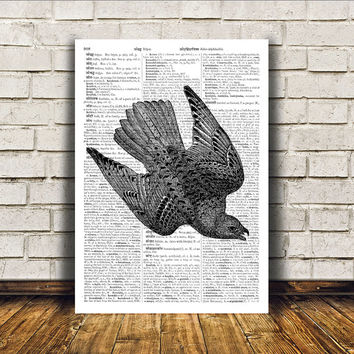 Bird art Hawk poster Dictionary print Modern decor RTA278