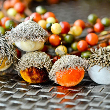 Set of 10 Silk Velvet Acorns in Candy Corn Colors, Yellows, Browns & Orange, Thanksgiving, Fall Decor, Table Centerpiece, Real Acorn Caps