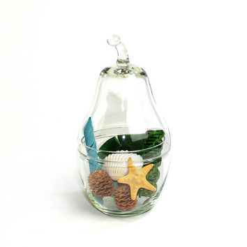 how to make a terrarium in an apothecary jar