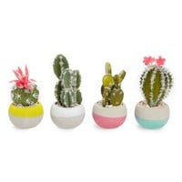 Decoris Set of 4 Potted Cacti | Nordstrom