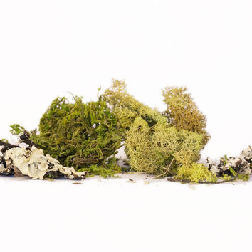 Moss and Lichen Mixed