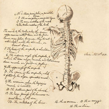 Skeleton Anatomy Sketch Chart Vintage Reproduction Print. Science text. Human Body. Educational Chart Science Biology Teacher Poster - CP126