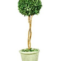 Galt International Naturally Preserved Real Boxwood Ball Topiary Plant with Twig Stem and Restoration Style White Pot, 21.5-Inch