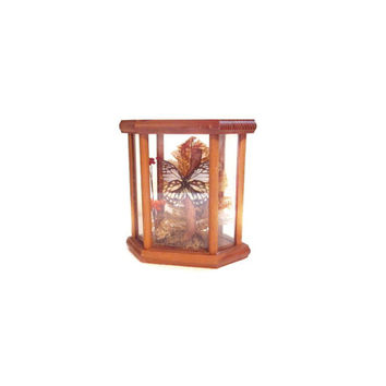 Preserved Butterfly, Glass Display Case / Terrarium