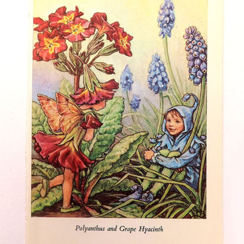 Flower Fairies Picture, Vintage Bookplate, Polyanthus and Grape Hyacinth Fairy, Spring flowers, nursery decor, nursery art, child's bedroom