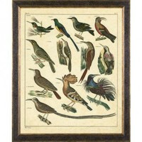 Phoenix Galleries Aviary 3 on Canvas Framed Print - HP903